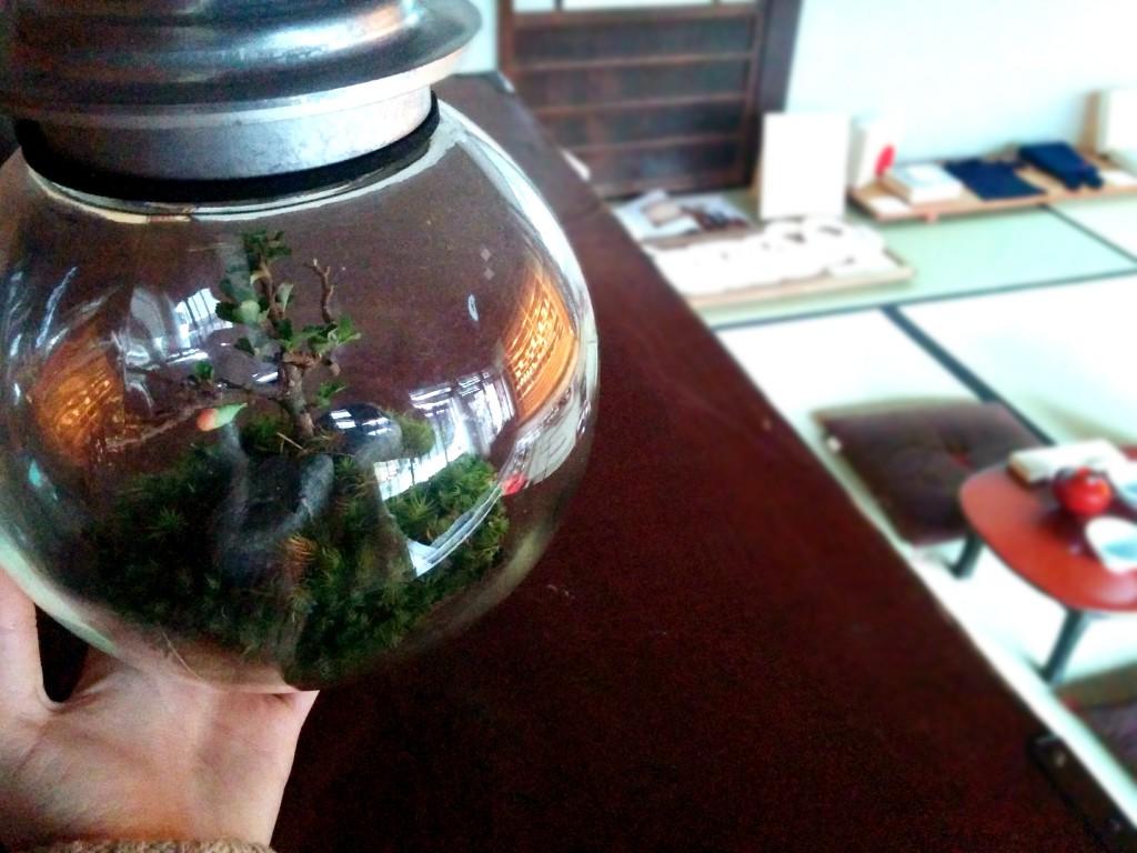 木瓜の花Space Colony