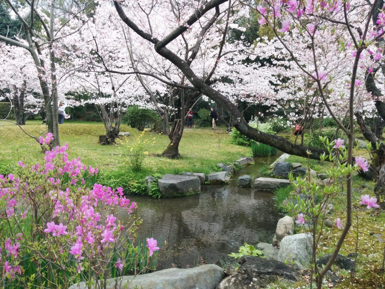 03_渉成園の桜
