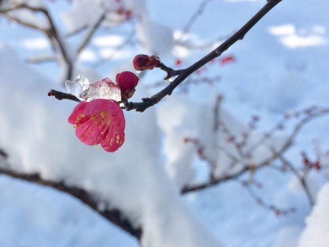 営業時間変更のお知らせ 雪