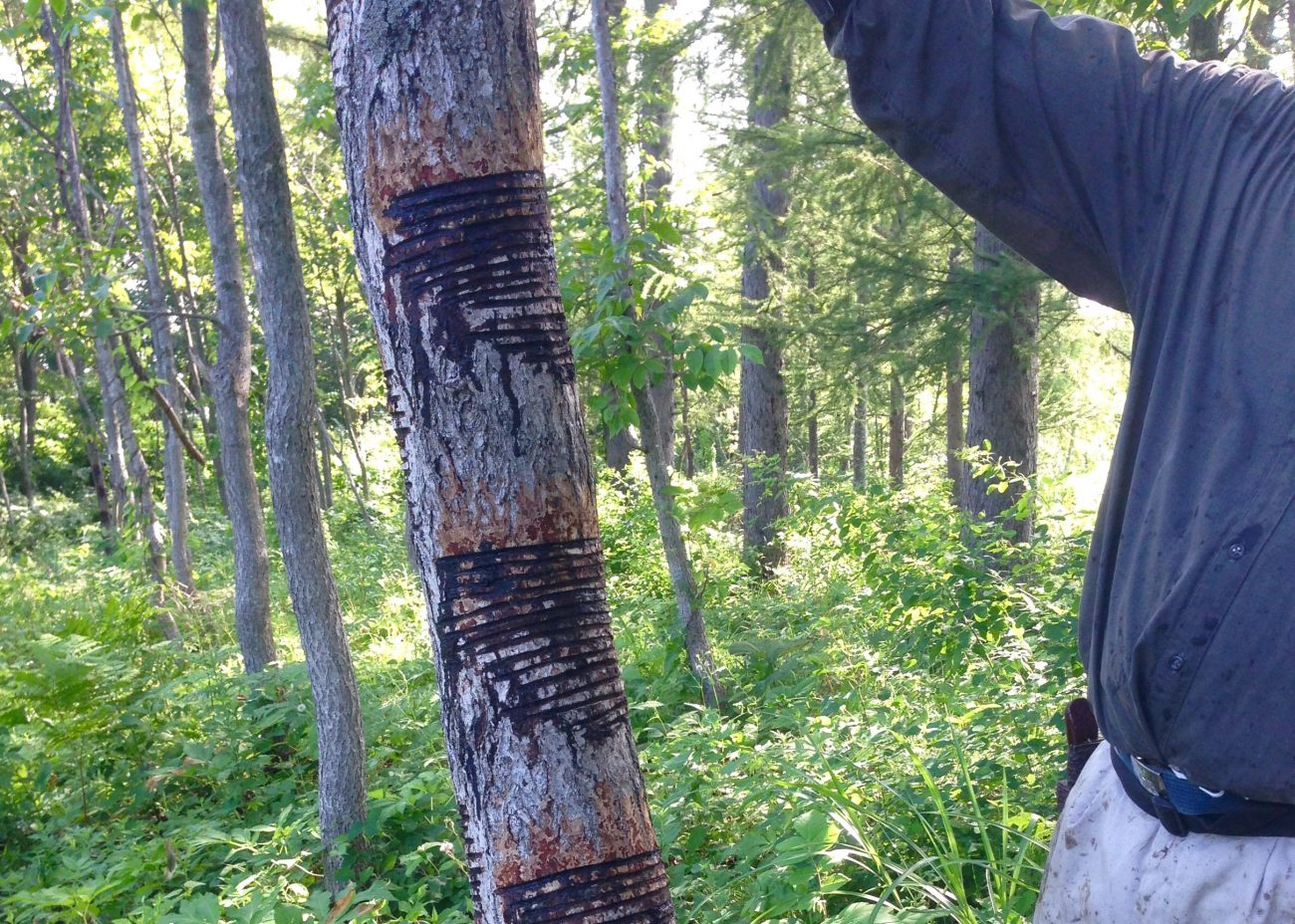 P6-2_漆の木