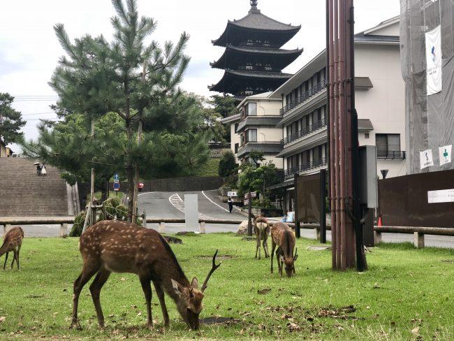 奈良aeru room 鹿